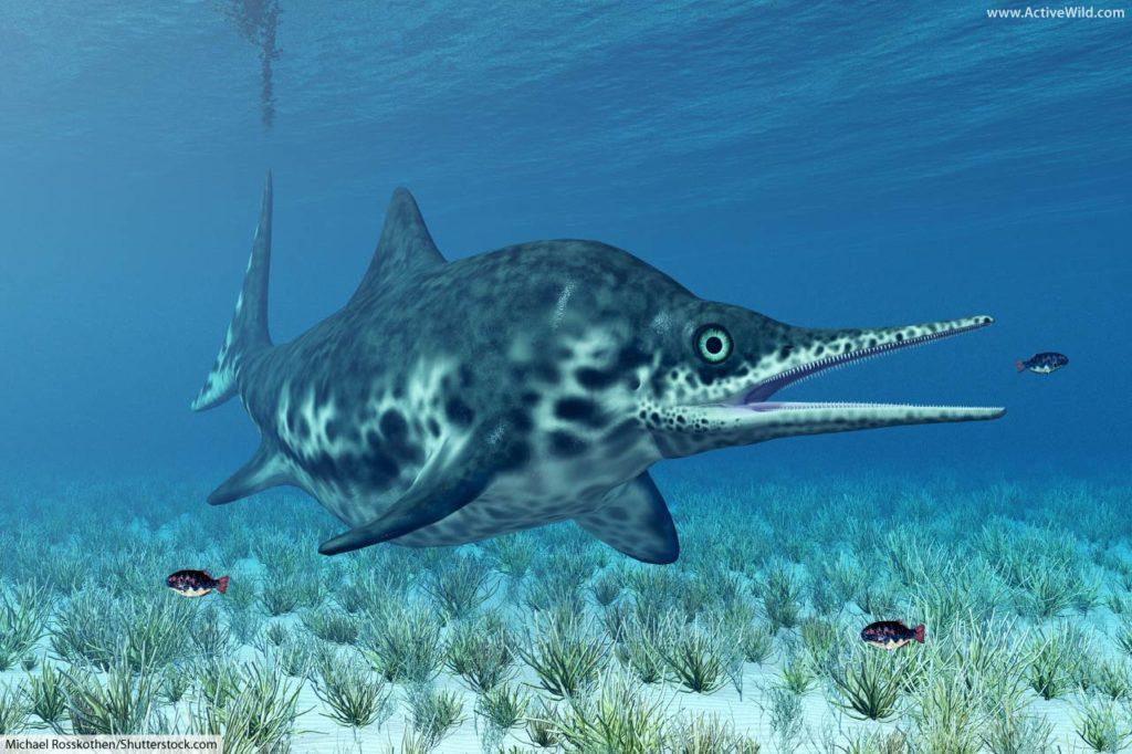 Ichthyosaur