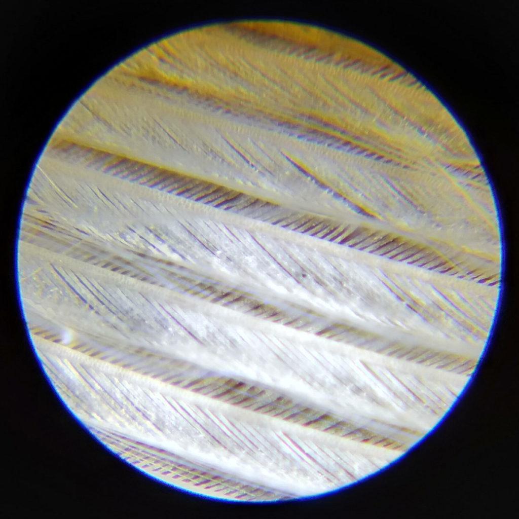 bird feather through microscope