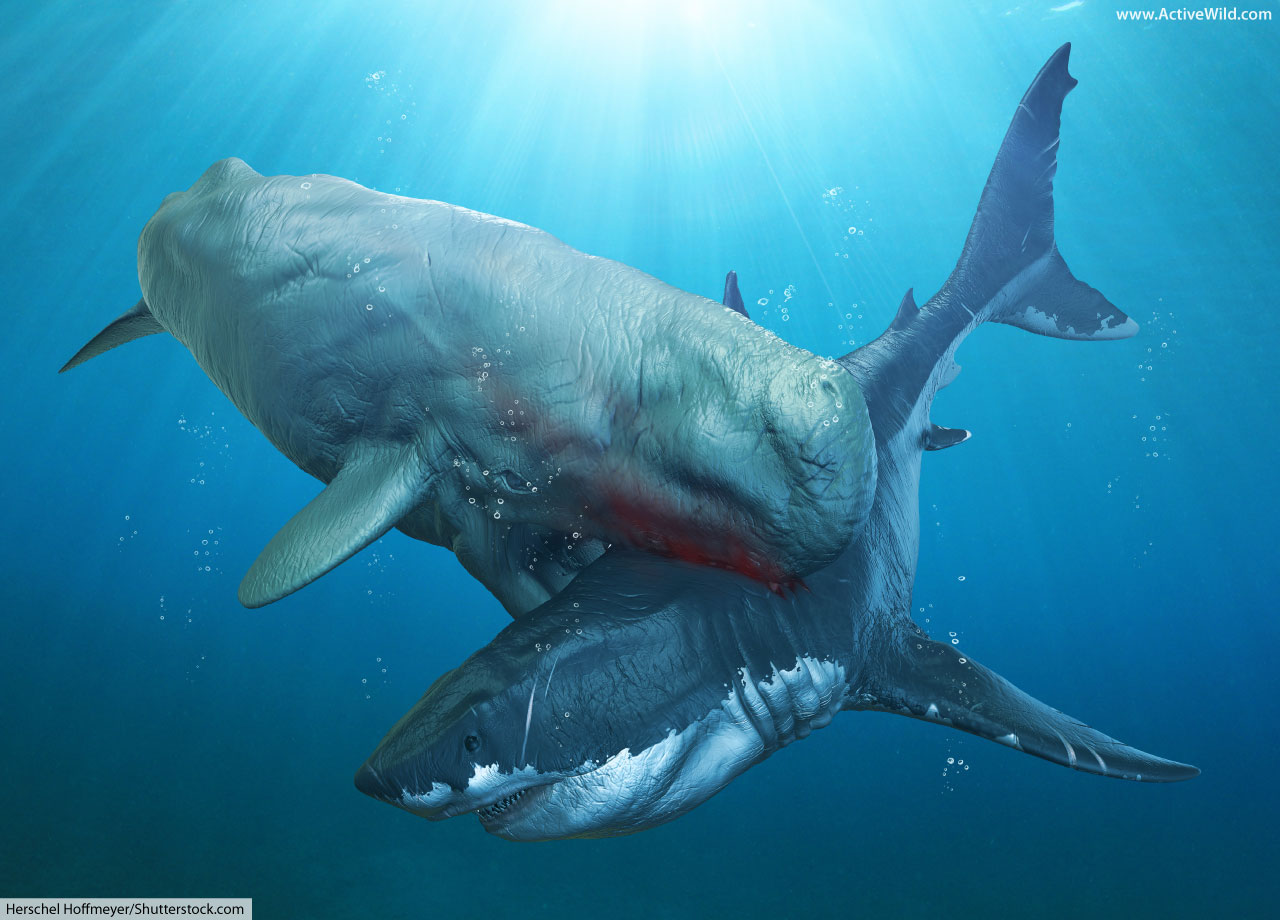 Megalodon Facts For Kids & Adults: The World's Biggest ...