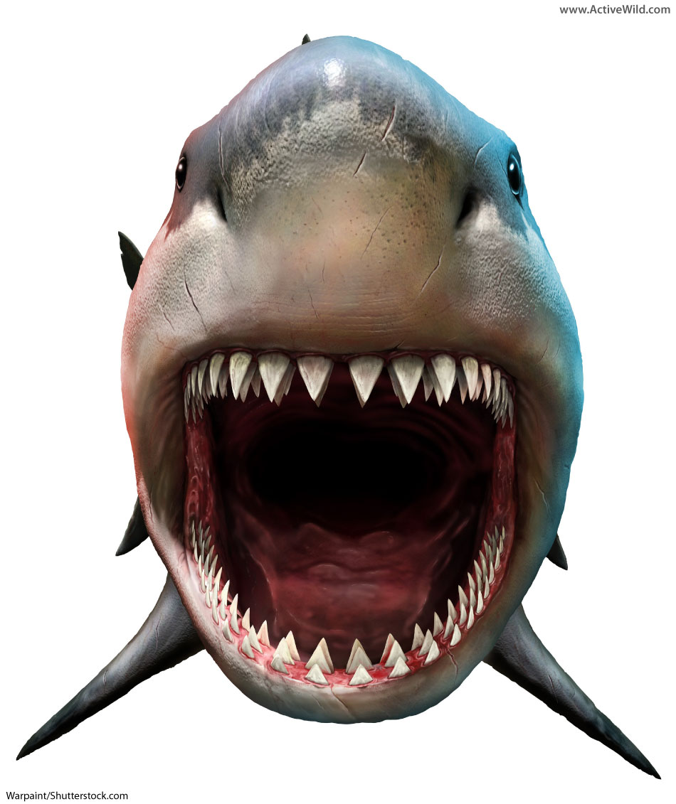 Megalodon Facts For Kids & Adults: The World's Biggest Ever