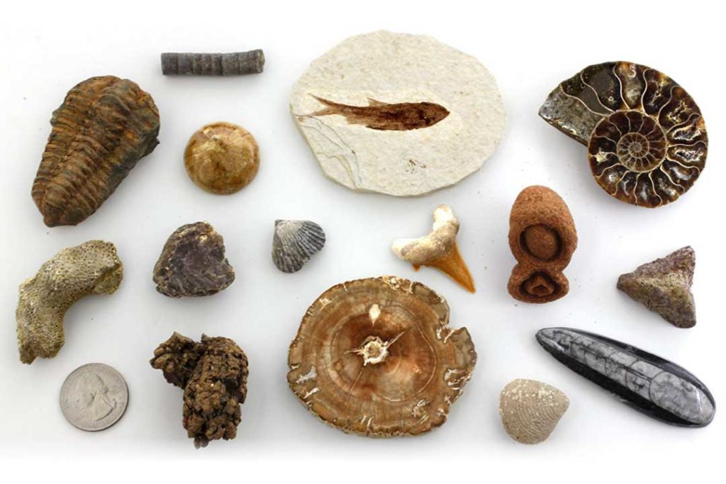 15 Fossil Collection Set
