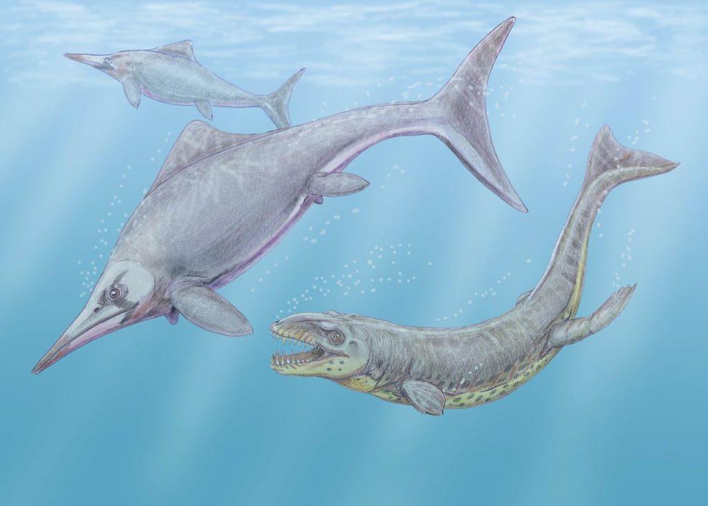 Dakosaurus and Caypullisaurus