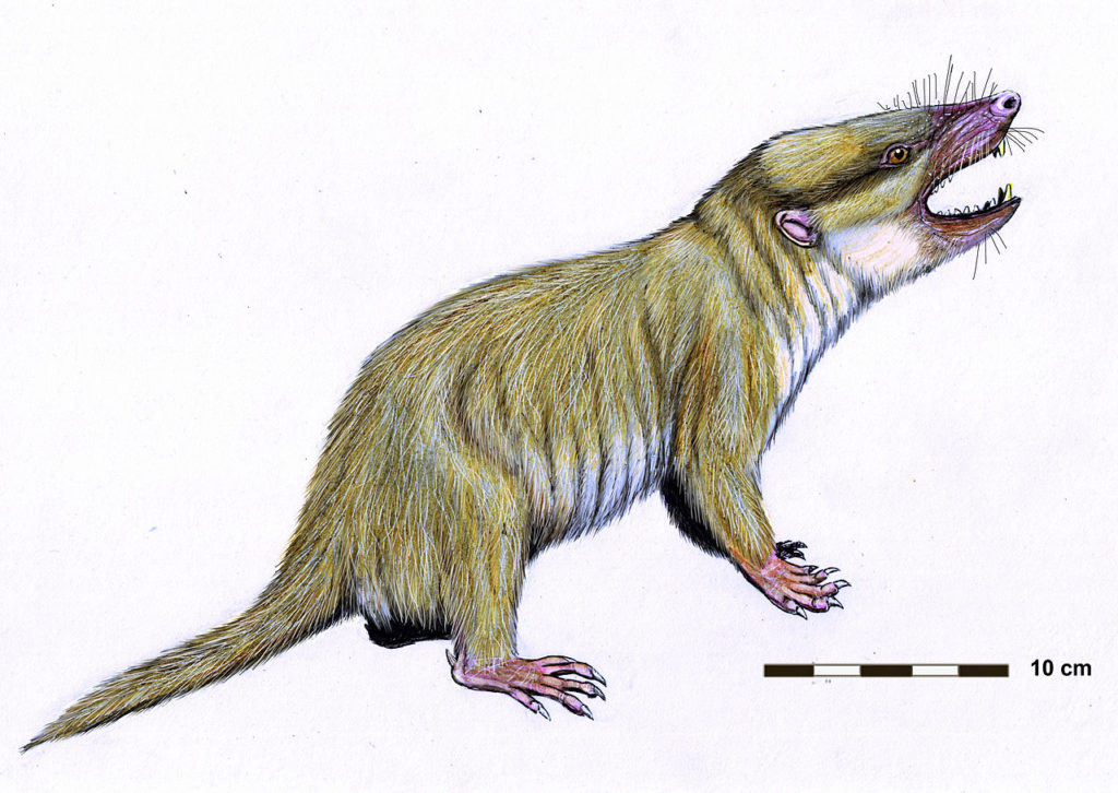 Gobiconodon was a predatory mammal from the Early Cretaceous.