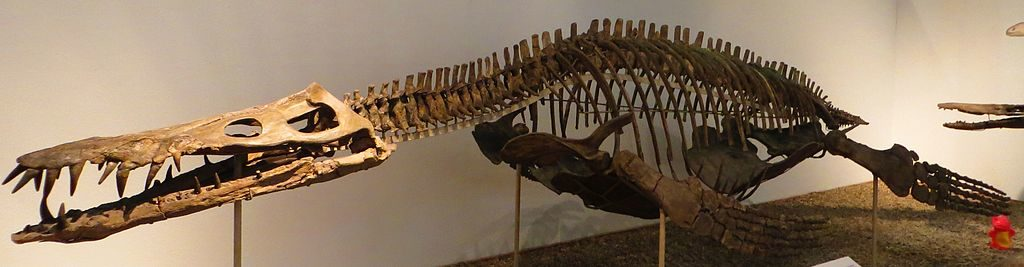 Liopleurodon_ferox