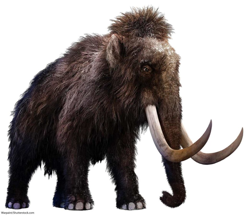 artists impression of a woolly mammoth