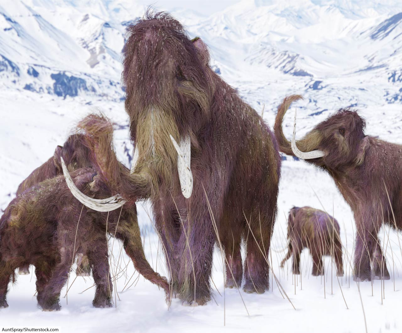 Woolly Mammoth Facts For Kids & Adults: Meet A Famous Ice ...