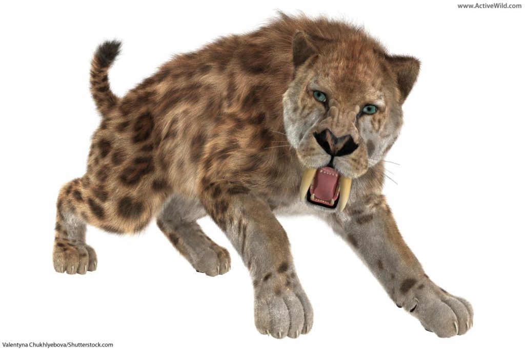 smilodon with spotted coat