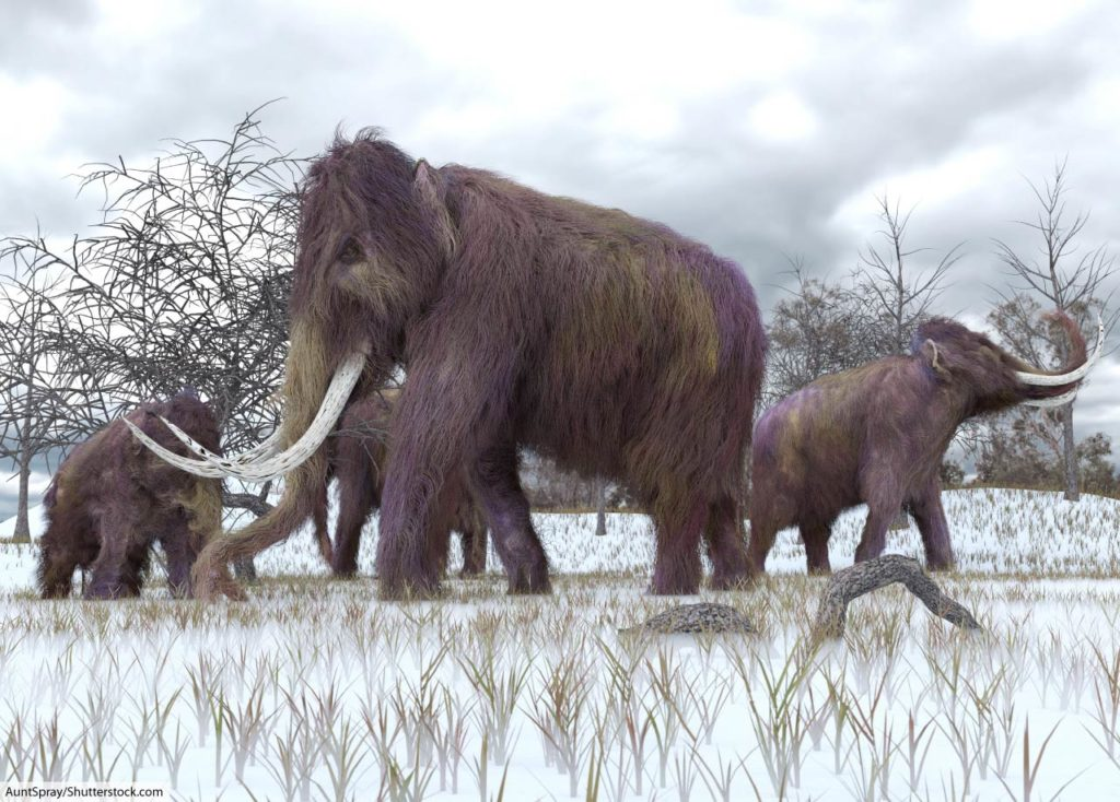 woolly mammoth herd