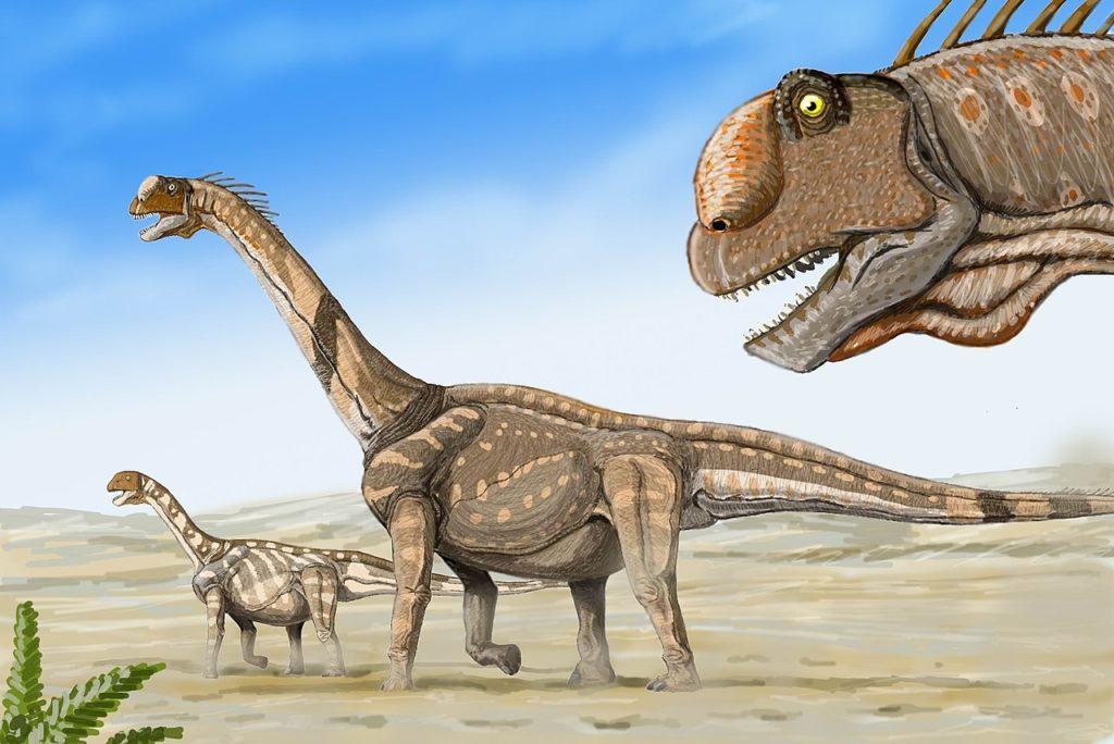 Camarasaurs