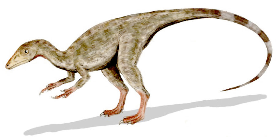 List Of Dinosaurs Dinosaur Names With Pictures Information Learn the names of dinosaurs with this video. list of dinosaurs dinosaur names with