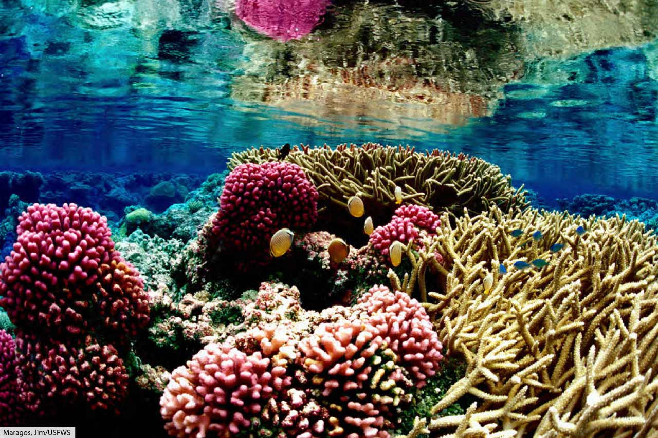 Ocean Animals For Kids & Adults: List Of Animals That Live ... - photo#36