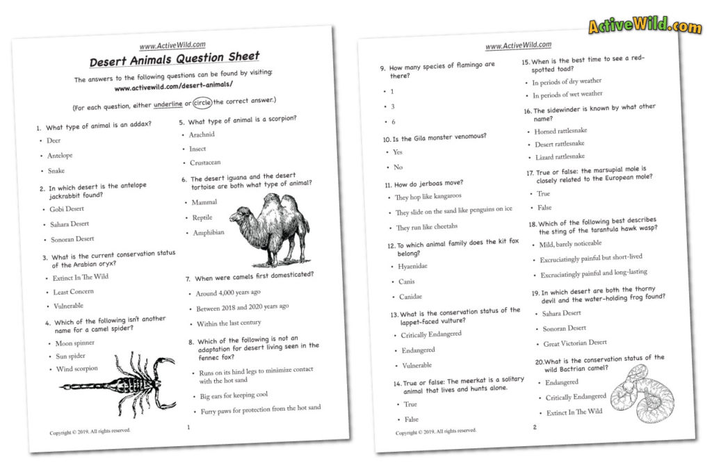 Desert animals worksheet