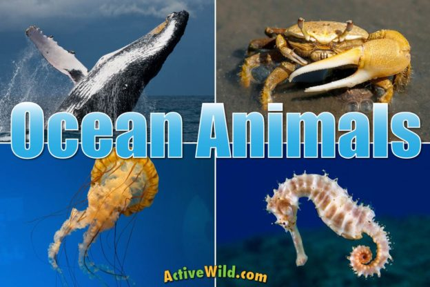 Image of: Fish Ocean Animals List Of Animals That Live In The Ocean With Pictures Facts Plus Free Question Sheet Active Wild Ocean Animals For Kids Adults List Of Animals That Live In The Ocean