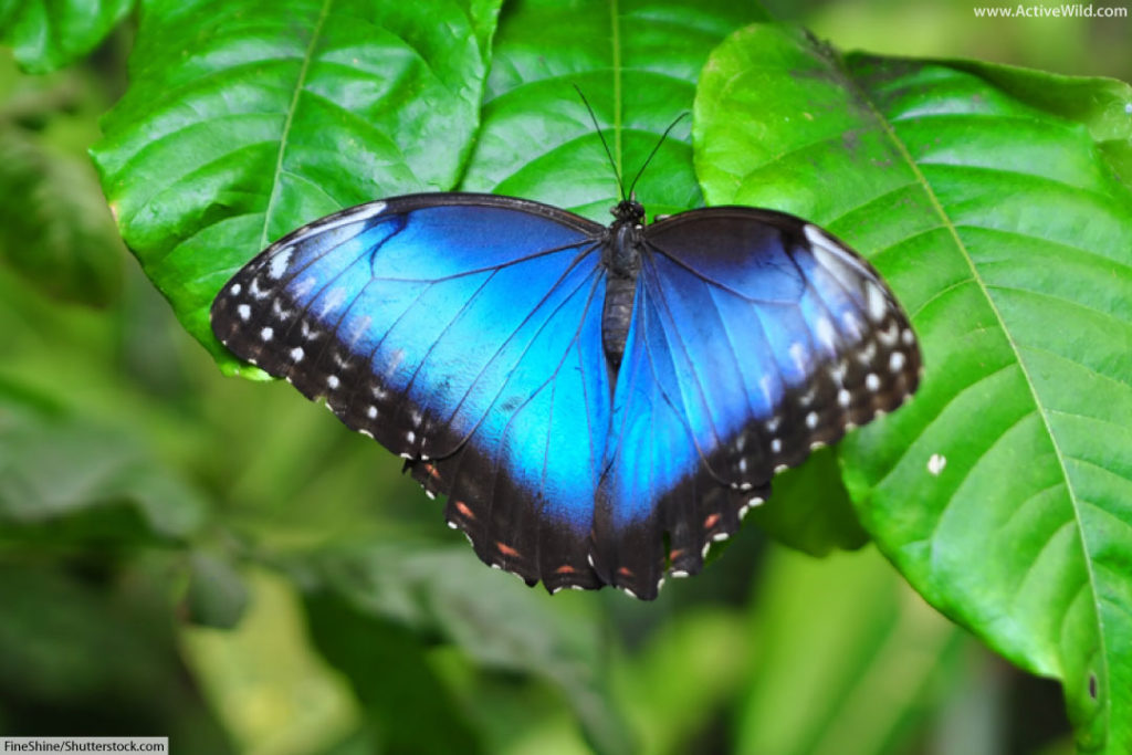 Rainforest Insects List: Insects That Live In Rainforests ...