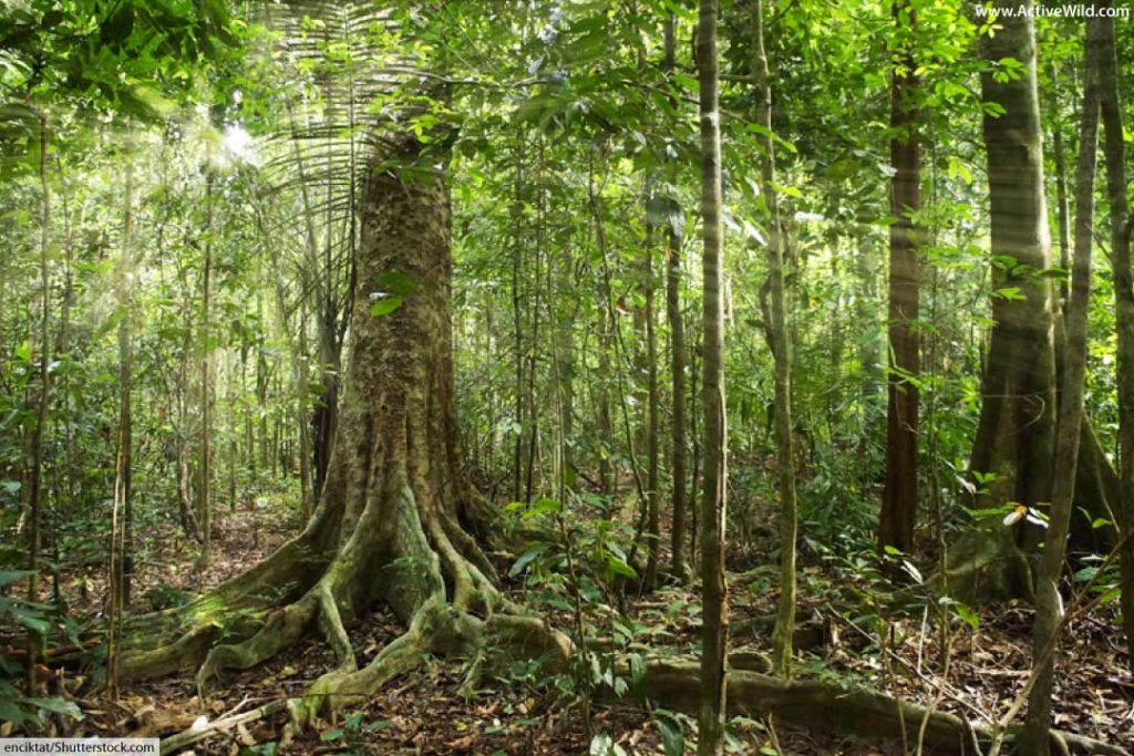 list of insects that live in the rainforest