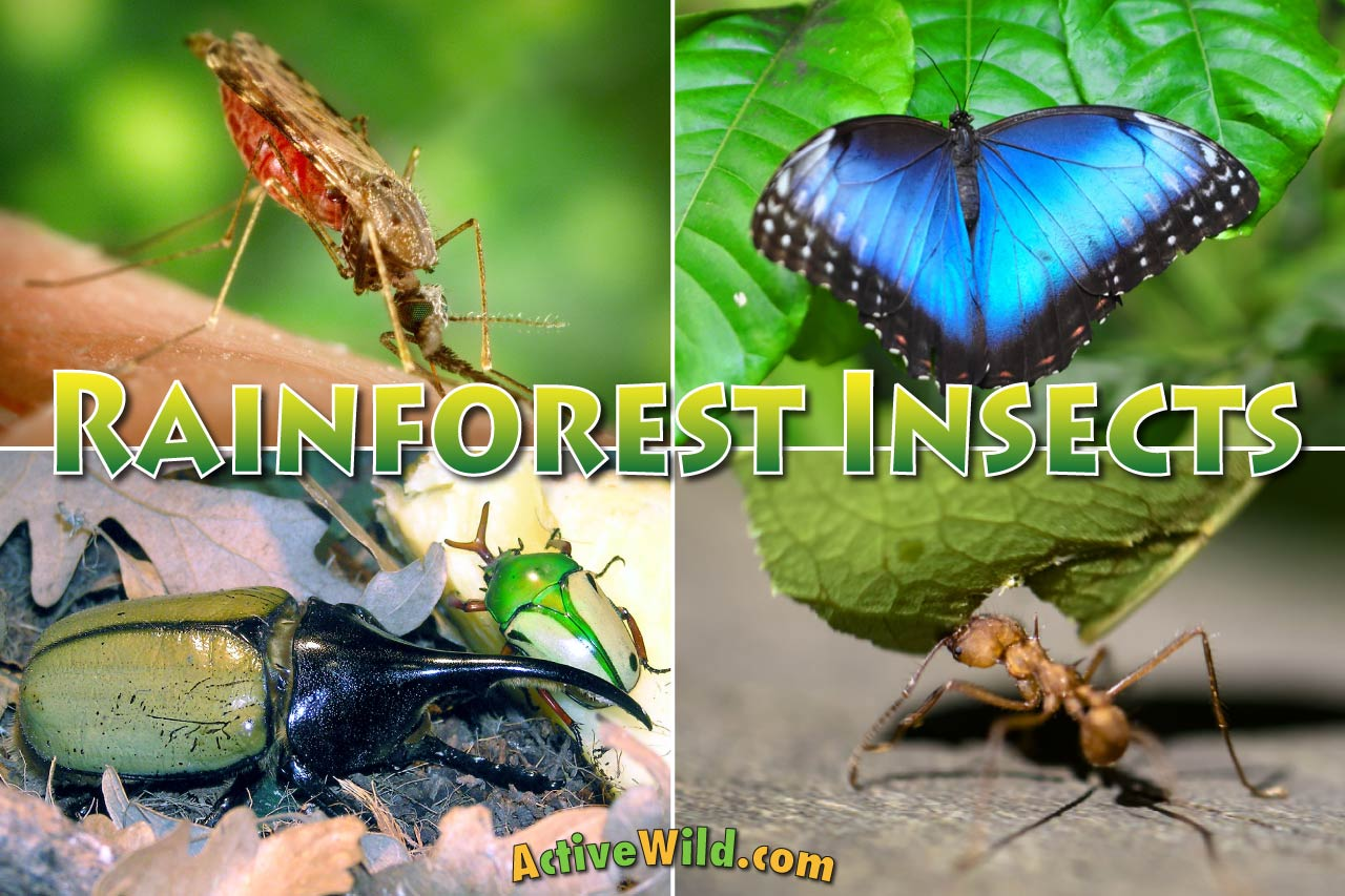 Rainforest Insects List: Insects That Live In Rainforests Pictures ...