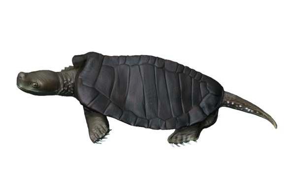 Kayentachelys - Jurassic turtle