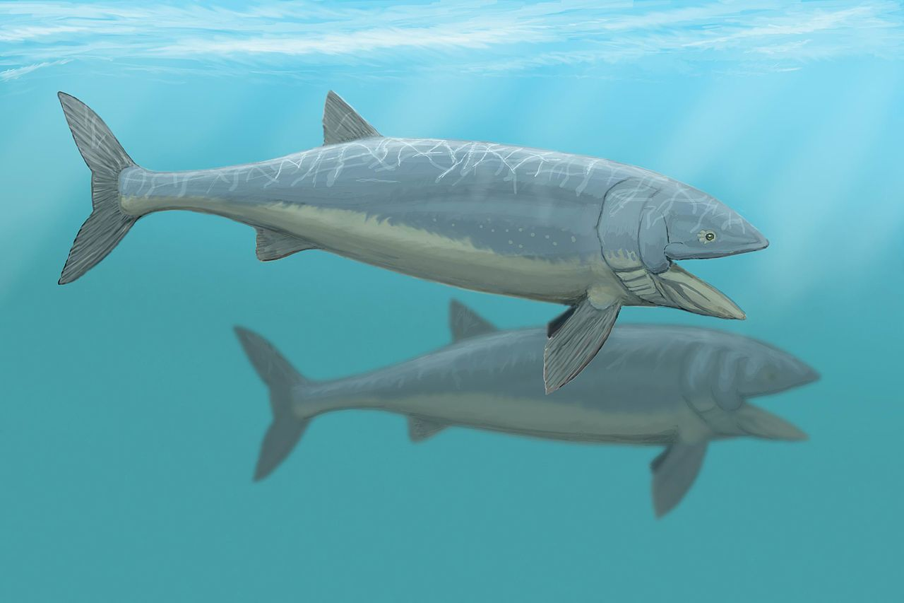 Leedsichthys - largest fish that ever lived