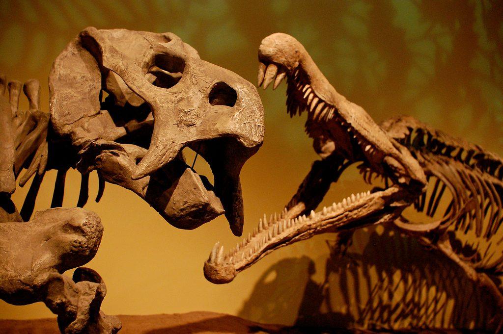Placerias vs Redondasaurus