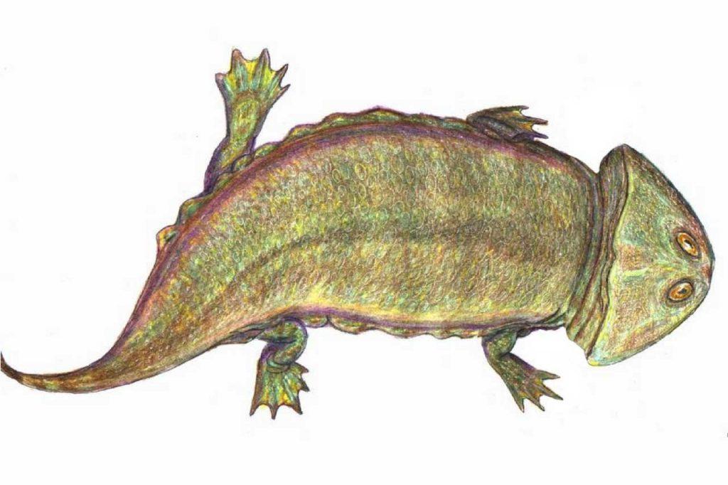 Plagiosaurus
