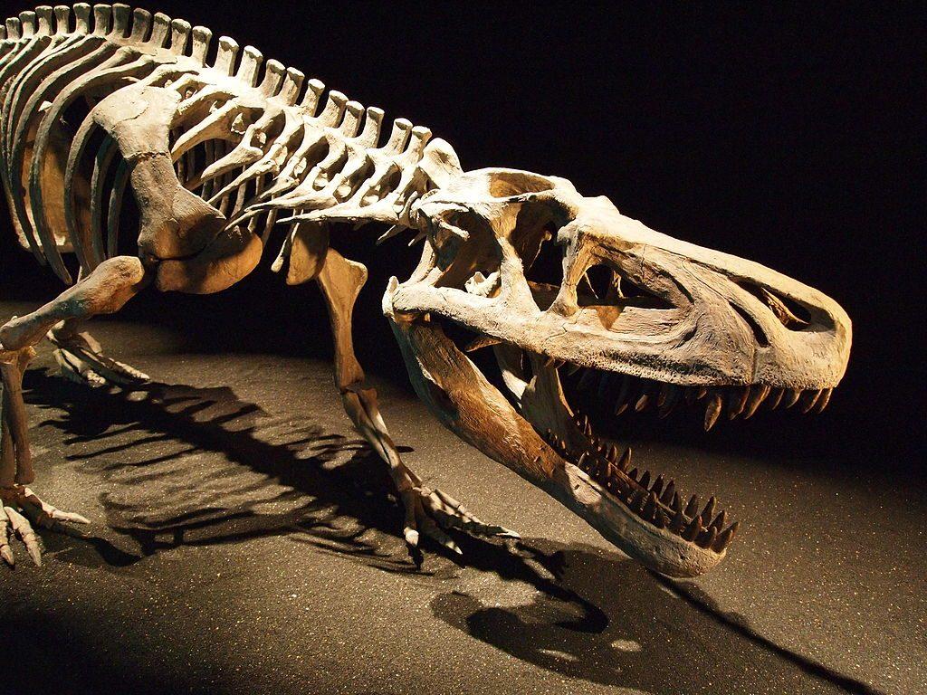 Saurosuchus