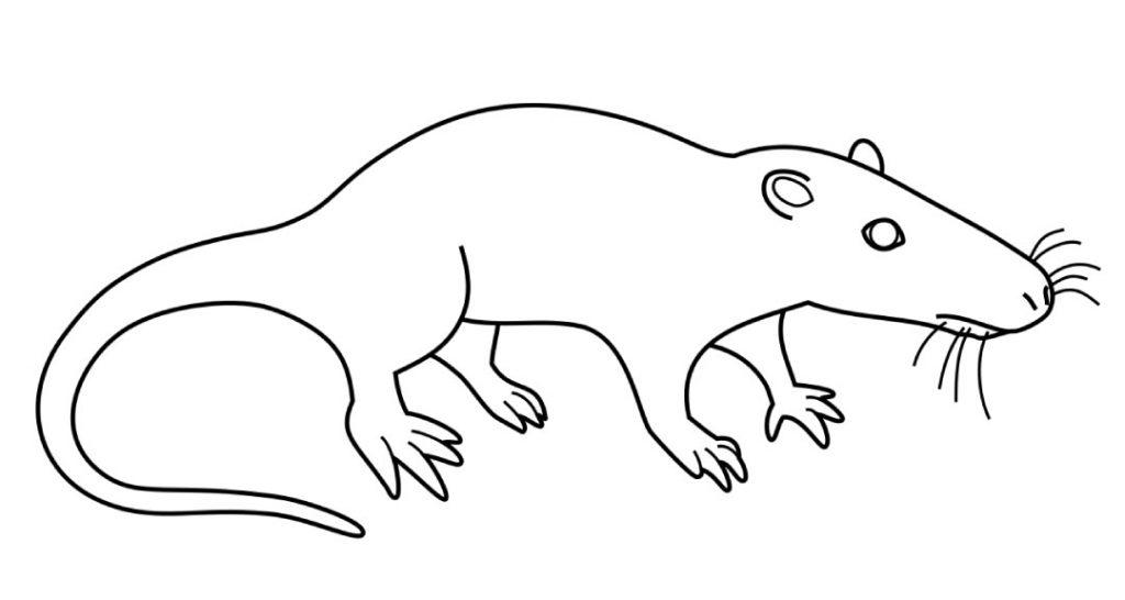 sinoconodon - Jurassic mammal