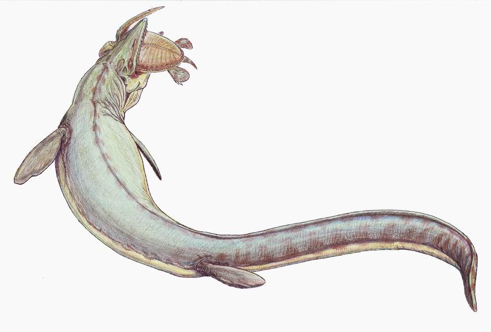 Mosasaurus hoffmanni.