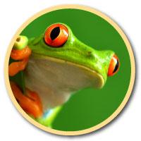 active wild frog logo