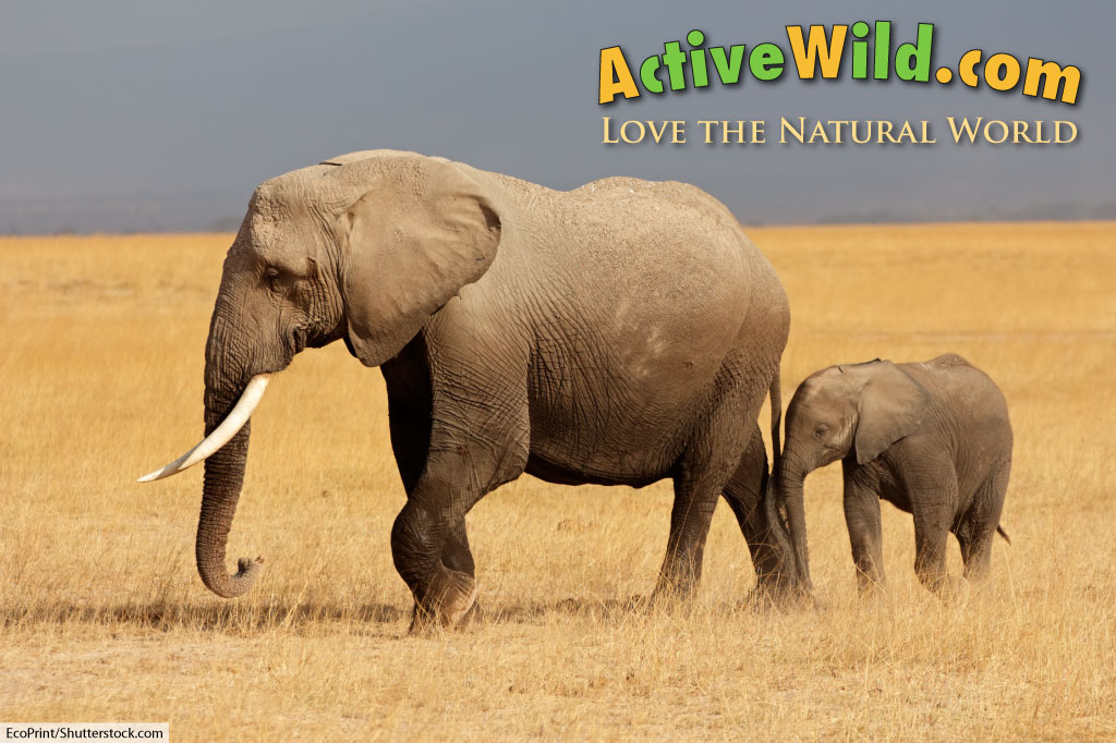 Active Wild About