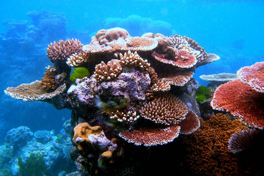 Coral at the Great Barrier Reef