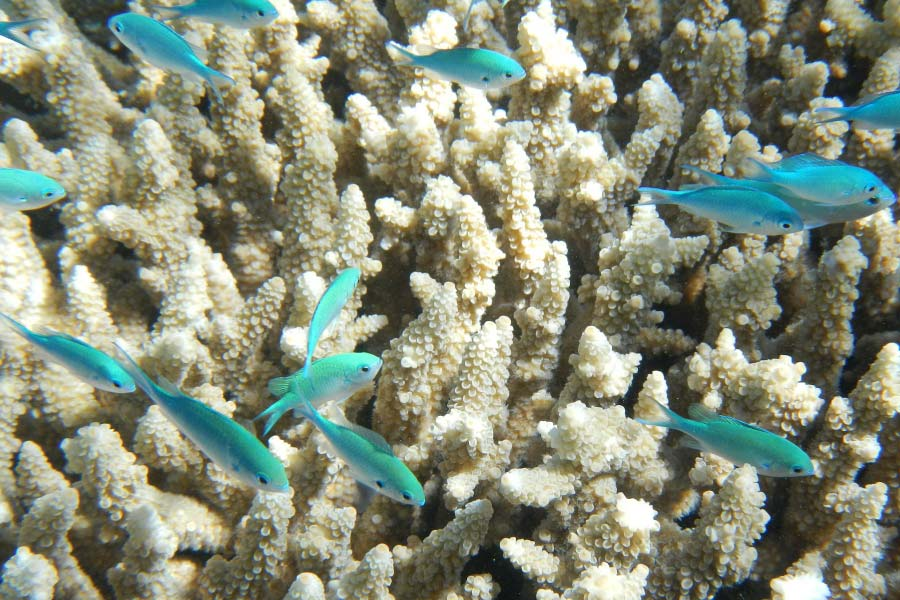 fish at the great barrier reef