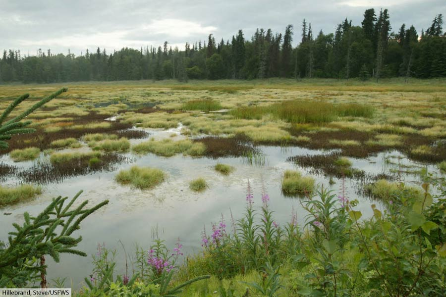 Bog In Taiga At Kenai National Wildlife Refuge