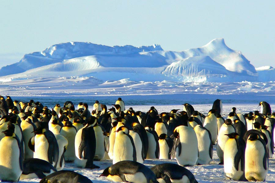 Emperor penguins on Antarctica