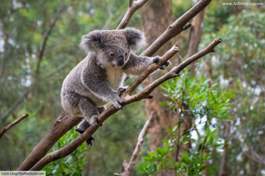 Australian Animals List With Pictures & Facts: Discover Australia's