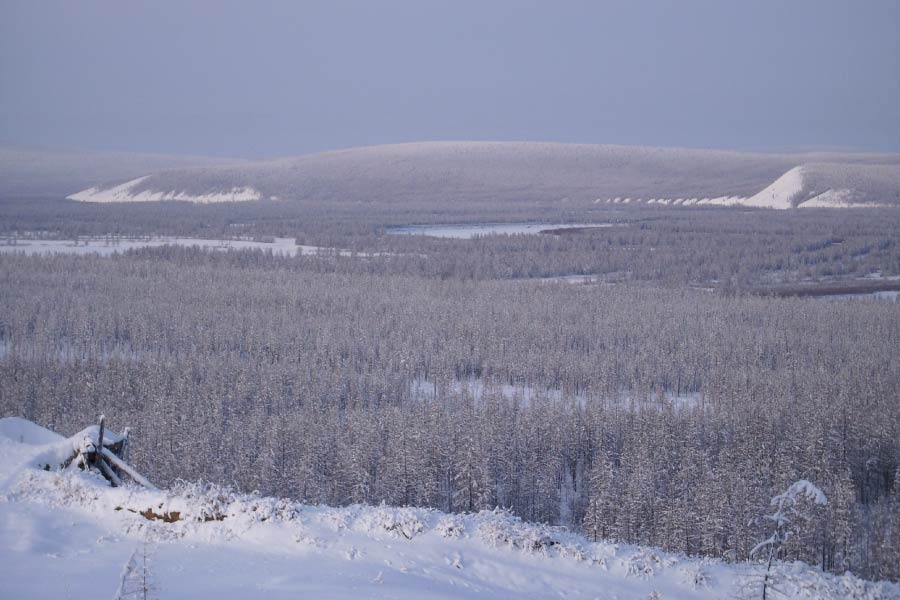 Snow covered taiga