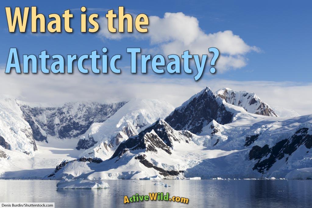 what is the antarctic treaty