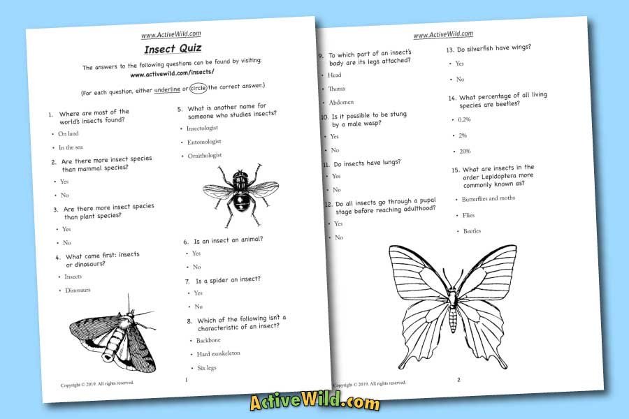 Printable Insect Quiz Sheet Download
