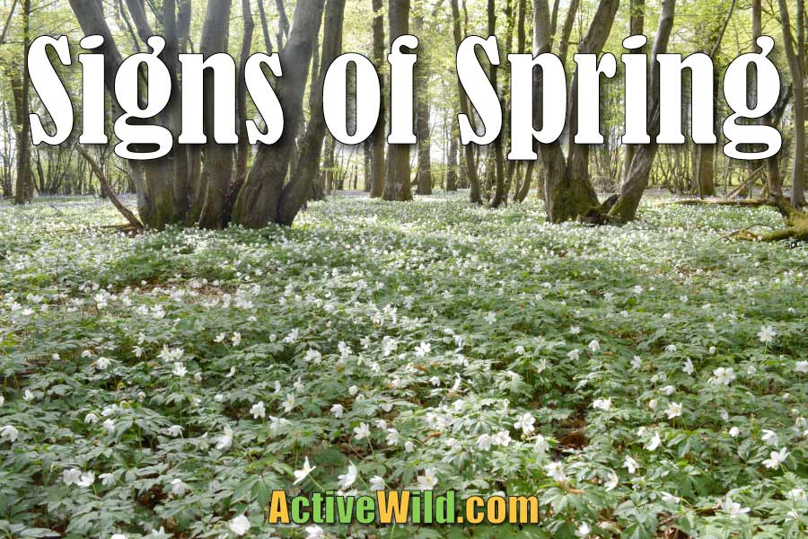 signs of spring in britain