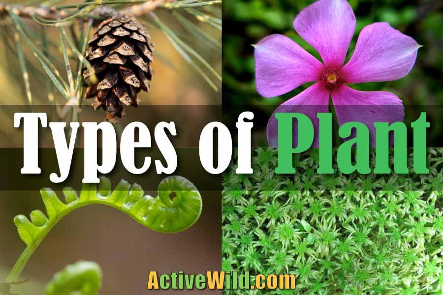 types of plant