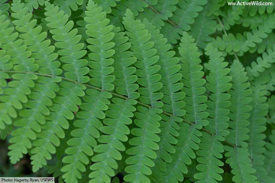 fern plants leaves