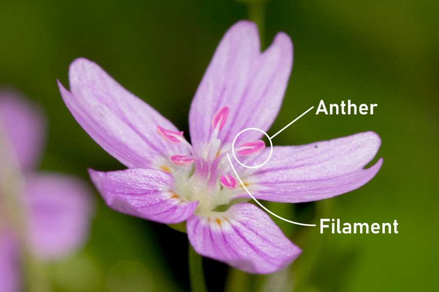 The Male Parts Of A Flower