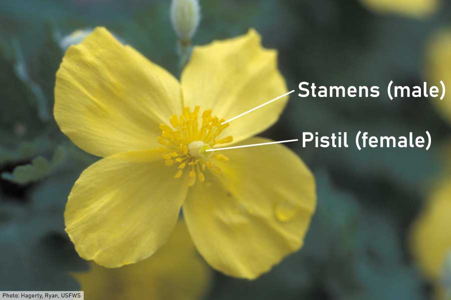 Male and female parts of a flower