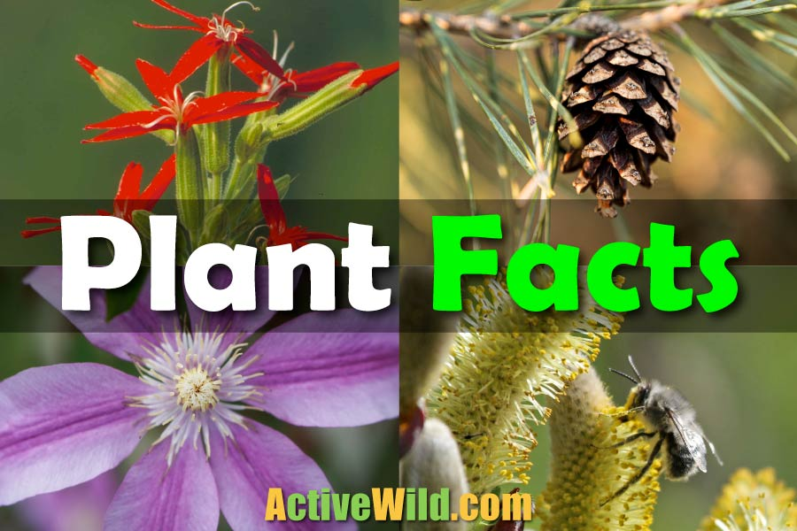 Plants Facts For Kids
