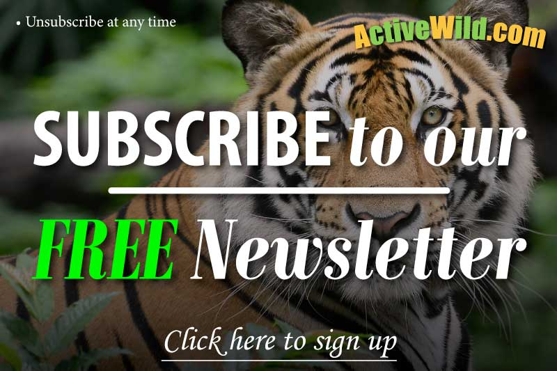 Active Wild Sign Up Image