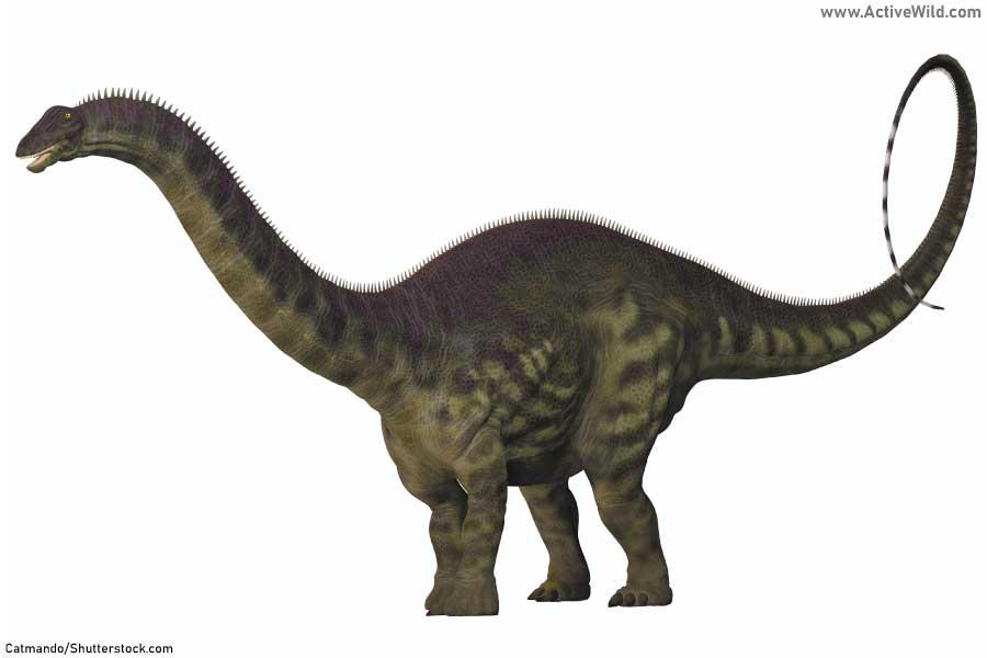 Apatosaurus Illustration