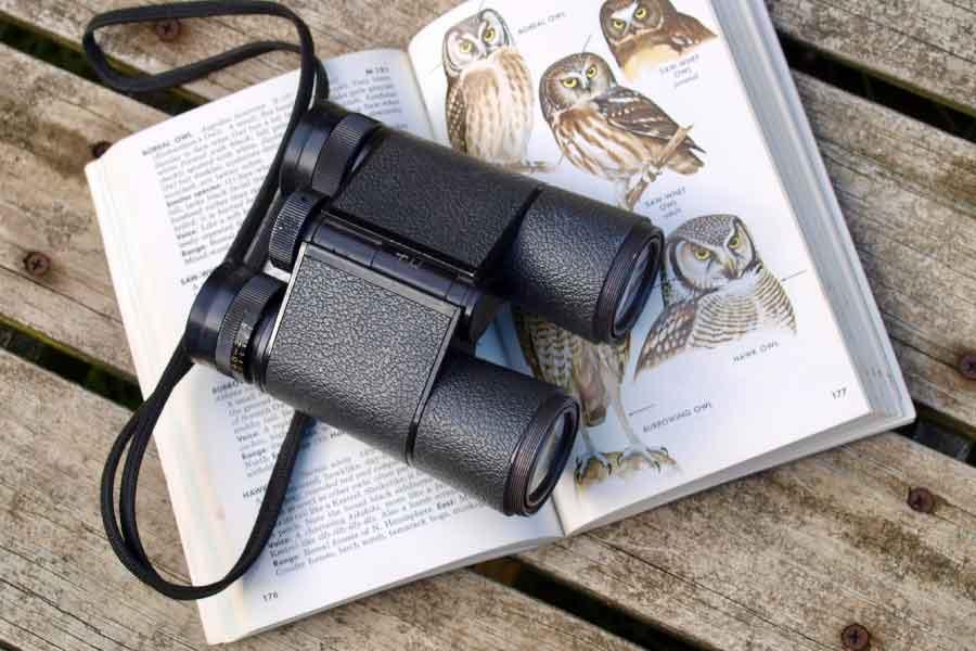 Binoculars on bird field guide