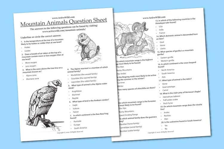 Mountain Animals Worksheet