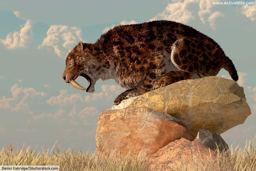 Prehistoric Cat Smilodon