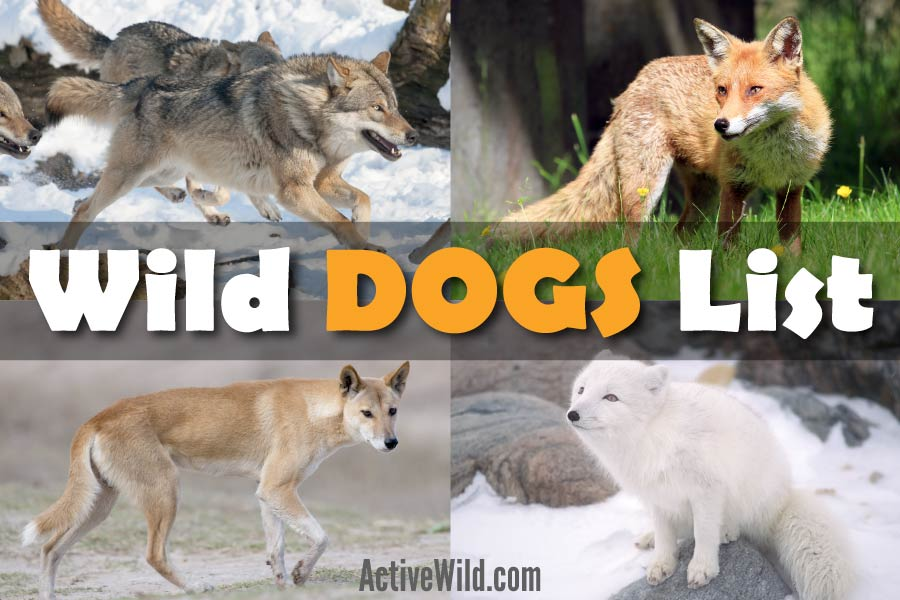 Wild Dogs Species List