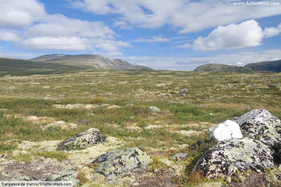Arctic Tundra Biome